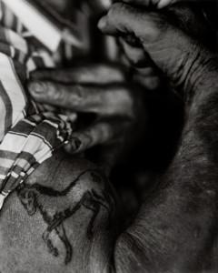 David's Horse Tattoo