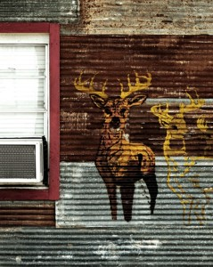 Deer Painting at Freiheit Country Store, New Braunfels, TX