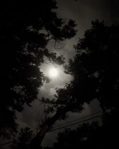 Full Moon through Pecan Trees, Texas