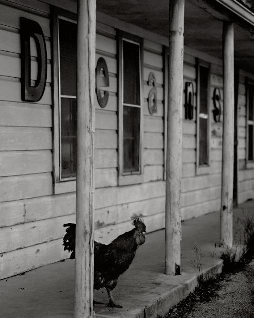 Rooster, Dean's Store, Weinert, Texas