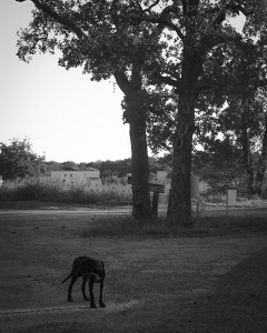 Dog on 114